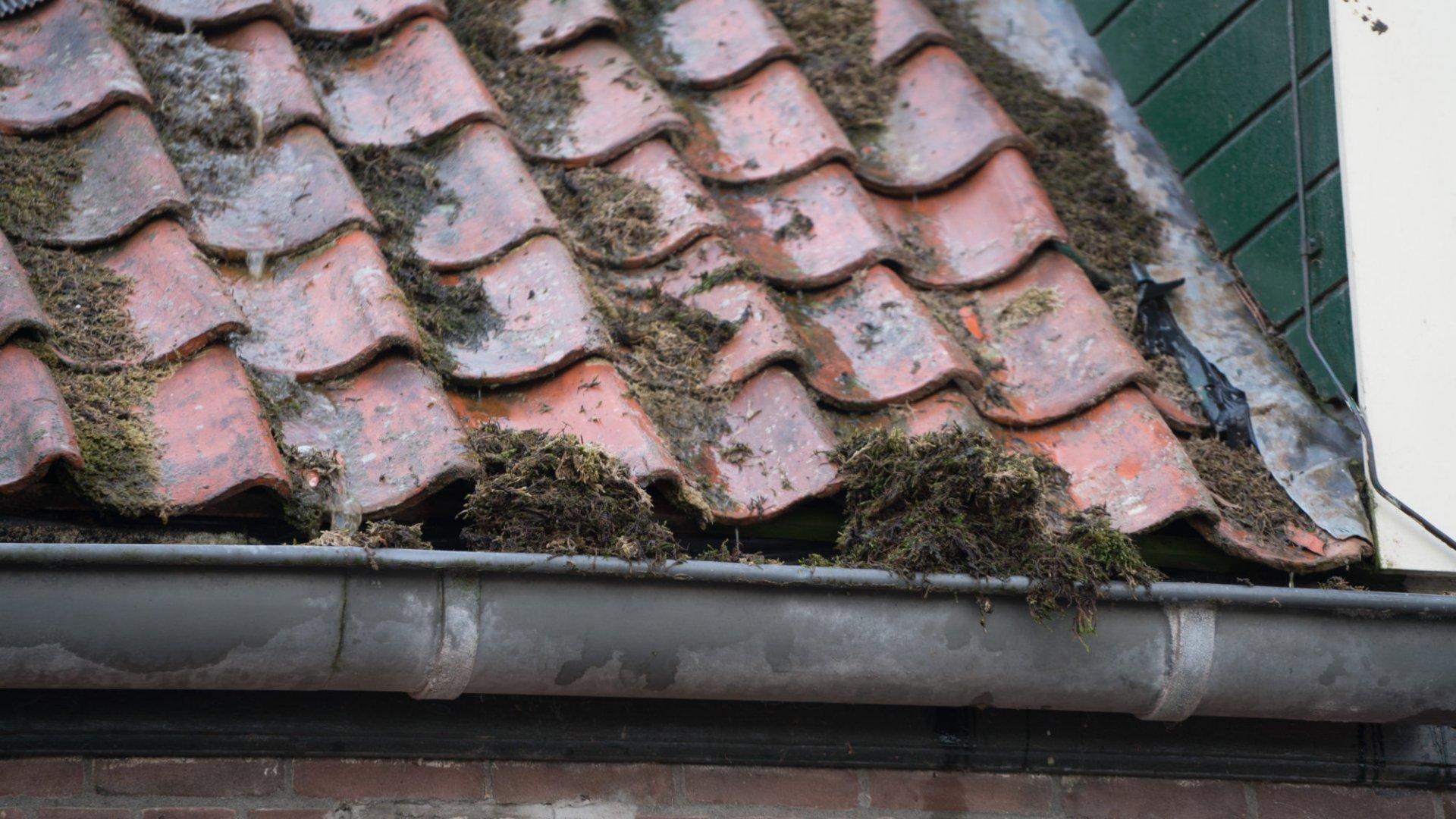 Onderhoud daken en dakgoten